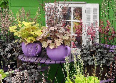 Nhà đẹp vườn xinh nhờ... ấm chén